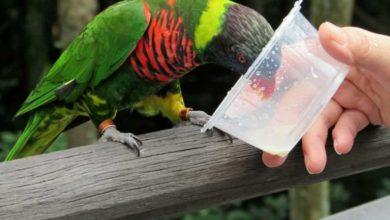 Photo of Поилка для попугая своими руками