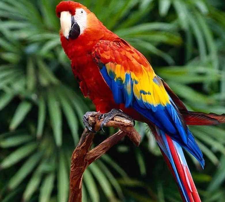 у попугая липома лечение