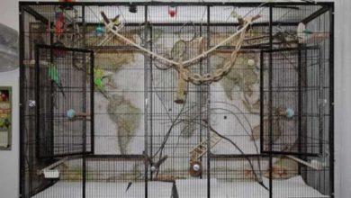 Photo of Варианты самодельных клеток для попугаев