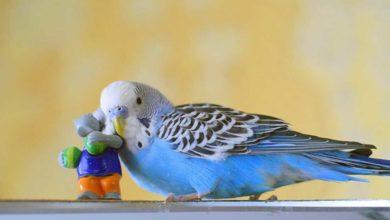 Тихие попугаи для дома