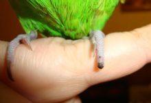 Photo of Что делать если попугай сломал лапку