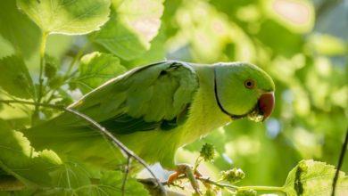 Photo of Какую зелень можно давать волнистым попугаям