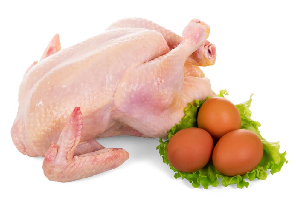 Куры мясо-яичной породы — лучшие для дома