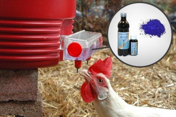 Метиленовая синь для кур — инструкция по применению