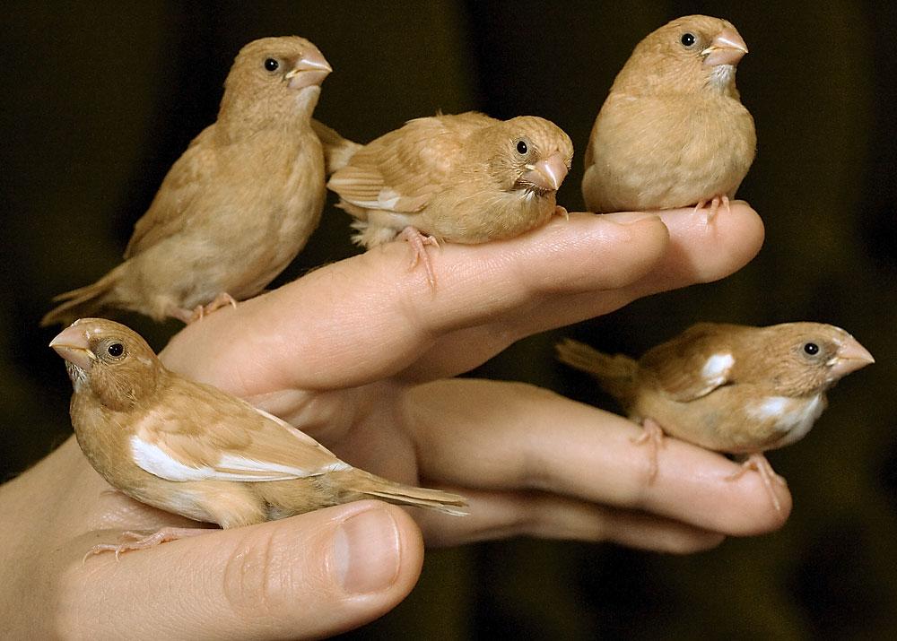 сколько живут разные птицы фото всей совокупности звезд