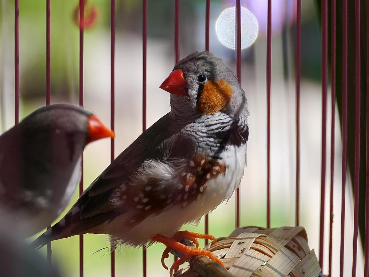 картинки птички амадин тех пор, признанию
