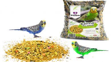 Photo of Как выбрать корм для попугая